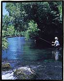 Dry fly fishing for wild trout at the Cumilahue River, Chile.
